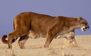 как сделать из резинок животных фото, как сделать из резинок животных фото