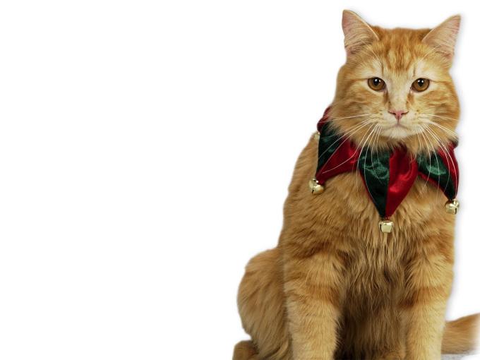 Котята обои на рабочий стол персидские котята